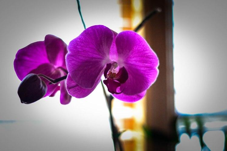 wpid-orchid3.jpg