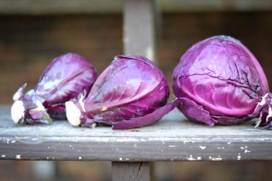 November cabbage